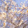 春日和近し