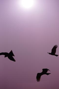 天空のシルエット ②