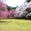 しだれ桜のたけくらべ広場その3