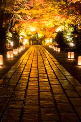 雨の参道(石山寺より)