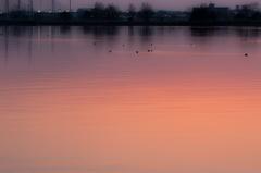 湖面風景(木場潟より)