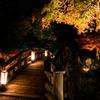 錦秋の高橋(玄宮園より)