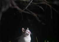 FUJIFILM X-T1で撮影した(高貴なノラ猫)の写真(画像)