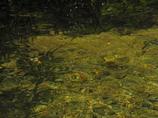 ヤマメの住む川