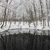 美人林の冬