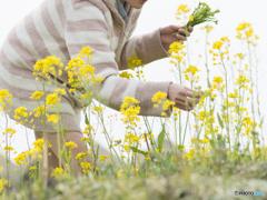 春の野に出でて若菜摘む君♪
