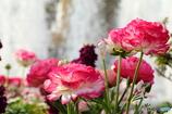 噴水の前で咲くお花