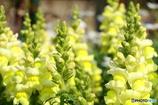 黄色いお花いっぱ~い