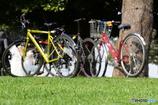 春の陽気でサイクリング