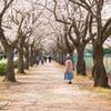 桜咲くその道は人生。