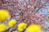 春のトリコロール。