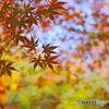 秋の襖を、開けてみて^^