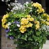 花かご 2