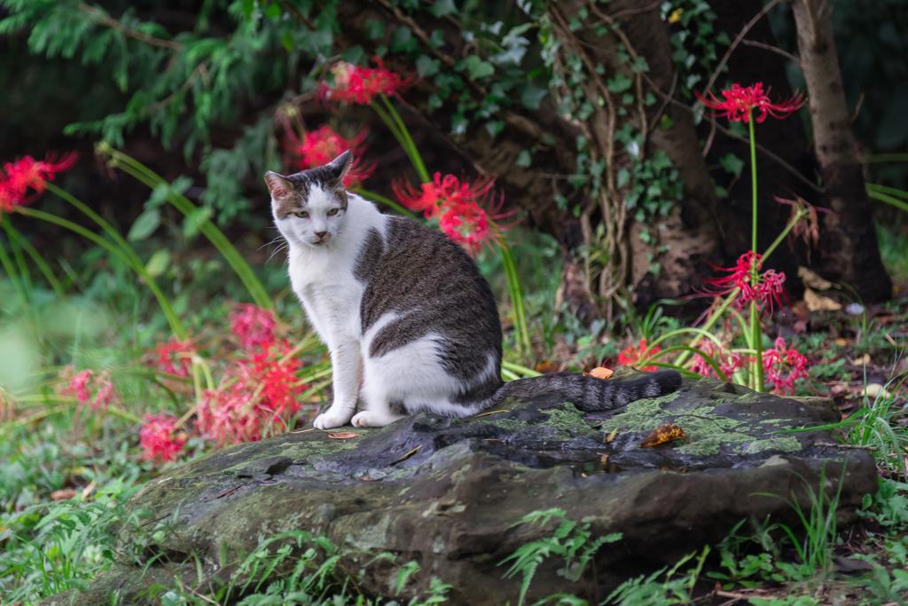 彼岸花の季節 称名寺