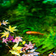 金魚の戯れ