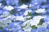 白と青の共演