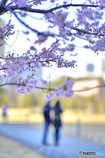 河津桜の咲く下で…