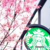 おかめ桜とスタバ