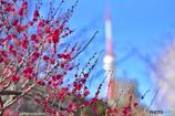 紅梅の先には東京タワー