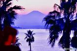 富士山を眺める友*