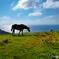 隠岐の島の旅フォト 国賀海岸2