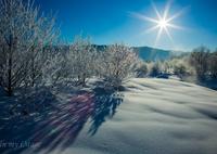 雪原の射光