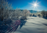 CANON Canon EOS 5D Mark IIIで撮影した(雪原の射光)の写真(画像)