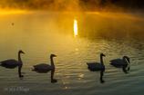 Swans Songs Ⅱ