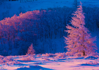 CANON Canon EOS 5D Mark IIIで撮影した(紅霧氷)の写真(画像)