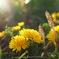 春の花_3