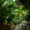 ジャングルサーファー