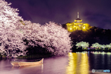 観桜の夕べ