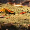 陽だまりの落ち葉