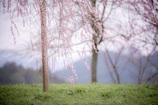 瀧桜の指先2