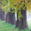 濡れそぼつ枝葉
