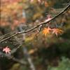今年最初の紅葉狩りは、雨天...