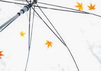 CANON Canon EOS 6Dで撮影した(雨だから・・・)の写真(画像)