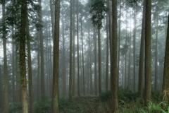 朝霧の森 ~立雲峡~