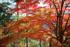 Beautiful JAPANⅢ ~吉野、高城山より~