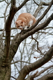 ③木の上からも睨まれる