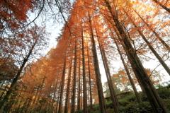 並木は輝きて ~私市植物園の秋Ⅲ~