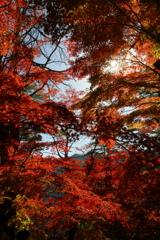 Beautiful JAPANⅡ ~吉野、高城山より~