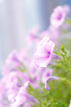 都会に咲く素敵な花達Ⅱ ~西梅田あたり~