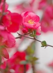 春さんぽⅡ