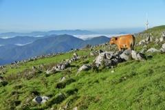 日本のスイスと呼ばれているそうです。 ~四国カルスト高原放牧場の朝Ⅲ~