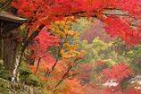 日吉大社の秋
