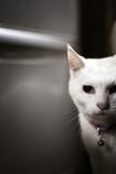 家政婦の猫