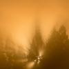 朝霧燃えて