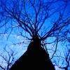 枯れ木が織り成す芸術