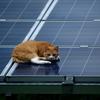 太陽光発電  -絶対どかねーぞッ-